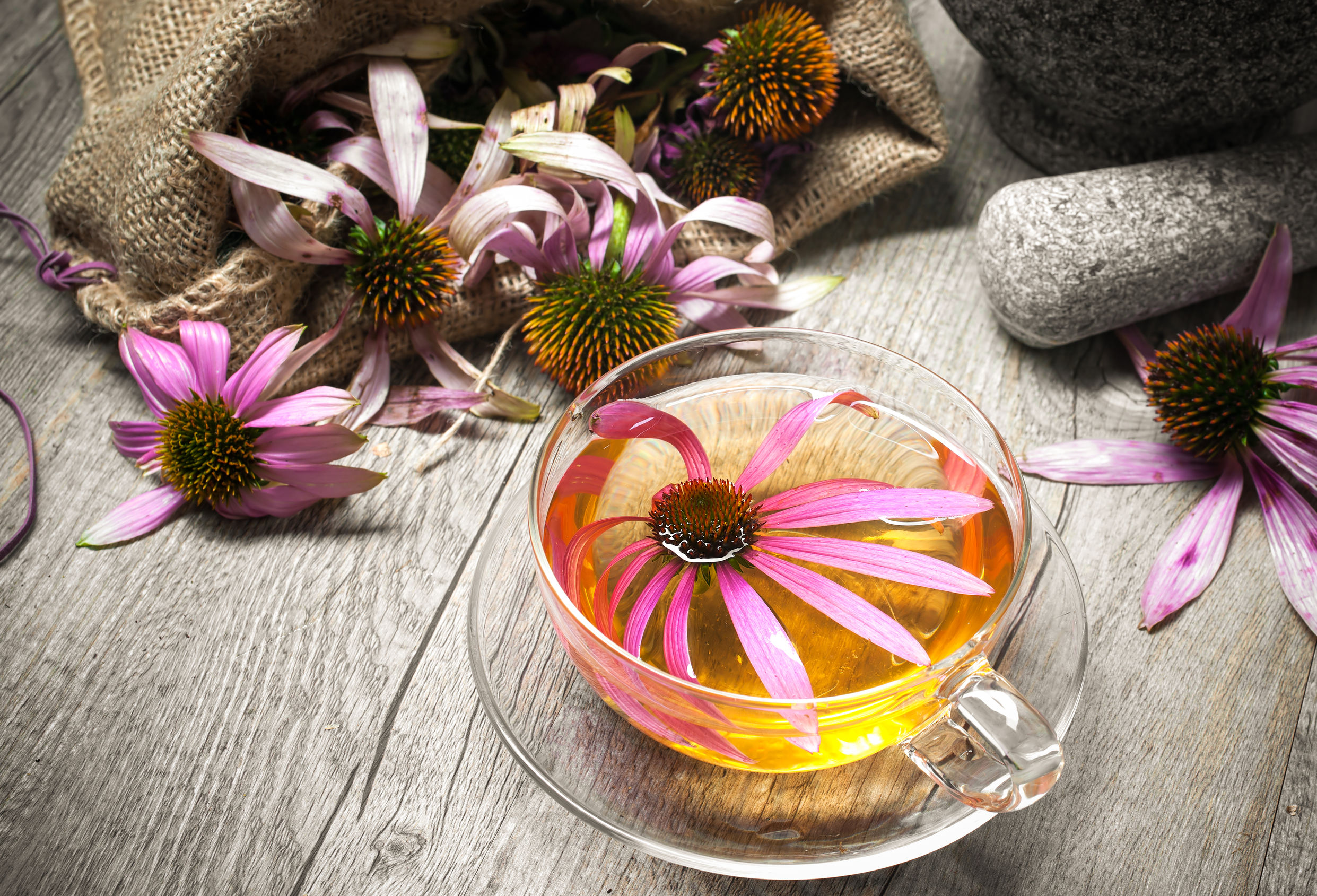 Best Echinacea Supplement 2021: Shopping Guide & Review